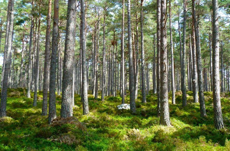 Zavod za okolje: Naravi v Sloveniji ne gre dobro